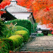 Mi primer viaje a Japón