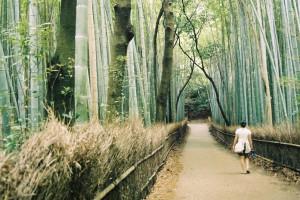 Bosque de bambú en Arashiyama, Kioto.
