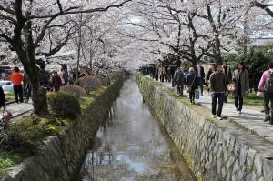 El Paseo del Filósofo adornado de cerezos en flor.