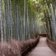 Excursiones desde Kioto a Arashiyama: Naturaleza en estado puro